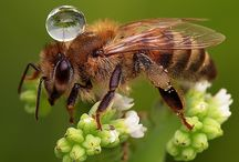 bees / Aren't bees wonderful! Be organic and look after our bees!