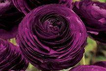 Flower/Fiori