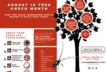 ALB Activities / by Stop the Asian Longhorned Beetle