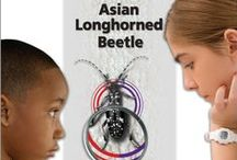 Educator Resources / by Stop the Asian Longhorned Beetle