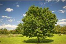We Love Healthy Trees