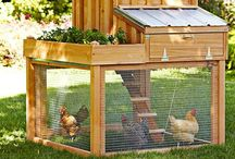 Flying the Coop / Chicken coops galore. / by Gabrielle Smith