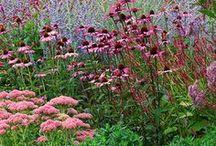 house plants & garden