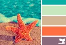 Color Palette / Colors