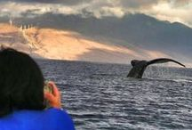 Places to go - Maui, Hawaii / Beaches, restaurants, places to visit in Maui