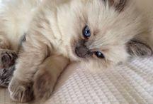 Little fuzz-balls ☺️ / Pretty, cute, furry little kitty's