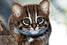 Koty foto / Cats