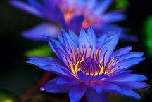 Flowers Bugs Snails / by Grama Deeji