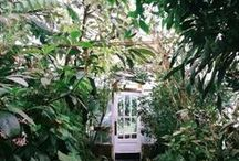 Garden / Garden Inspiration, flowers