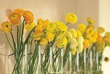 { spring flowers }