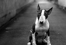 DOGS / all things dog related! some of our favorite photos and products for your best friend.