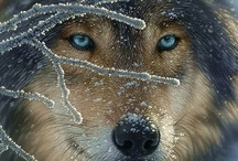 animals....wolves / by Barbara Pence