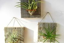 Plants & Succulents / Get inspired by the beauty of nature