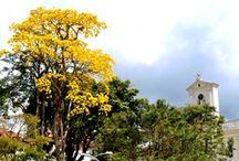 Colombia mi tierra tan linda / by Yvonne Hartley