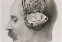 anatomical / by Ryszard Krzysztof