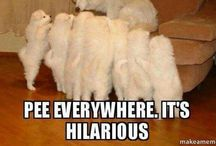 A laugh a day keeps the vet away! / Just plain funny stuff!