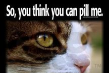 So you think you can pill me??? / Helpful hints on giving your cat or dog needed medication