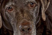 A pet is forever! / Caring for your senior pet