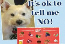 Doggy delight or disaster??? / Ever wonder what food or treats are safe for your pet?