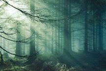 forests to get lost in