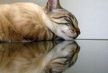 Réflection