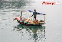 Mamiya Leaf, fotos / Fotografías tomadas con #MamiyaLeaf