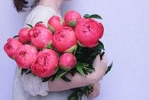 Flowers   P e o n i e s