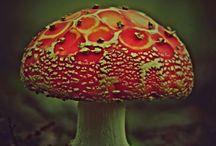 Mushrooms and Fungus / by Kathy Greening