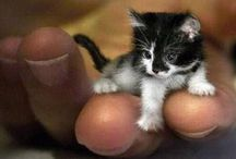 Cute Baby Animals / PLEASE ONLY PIN LIVE BABY ANIMAL PICTURES! NO STUFFED ANIMALS!THANK YOU VERY MUCH!  / by Kathy Greening
