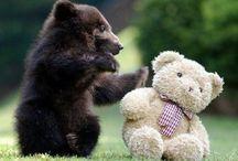 cute animals ;)