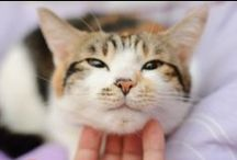 Older Cats / Expert advice expert advice on caring for your feline companions as they get older.