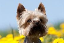 Springtime Safety / Top tips for looking after your pet throughout spring