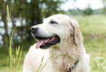 Older Dogs / All of our top tips and expert advice on caring for your canine companions as they get older.