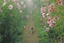 Monet / Monet s Garden, Giverny Village, France