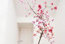 PINK! / Od Pepta po Baby, ružová je túto jar jednoducho HOT! Zahrejte sa, oslaďte si život, nasaďte si ružové okuliare! Spríjemnite si deň pozitívnou energiou, ktorú táto sofistikovaná a prekvapivo elegantná farba v sebe ukrýva!