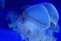 blu - blue