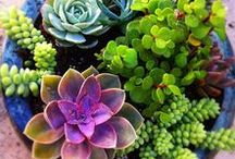 Flowers & Gardening / Gardening tips, beautiful plants and flowers, pots and containers, seeds and planting, fruits, vegetables and herbs, fertilizer and weed/pest control, gorgeous lawns and gardens, raised beds, floral arrangements, vases, centerpieces and more. Inspiration about anything that grows!