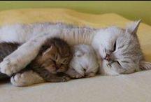 Cat Cuddles  / Cat Cuddles, Cats,