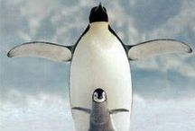 Penguin Patrol / An ode, in pinboard form, to the Butler mascot.