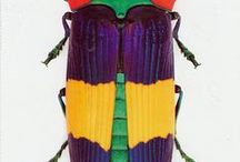 World of Insects / the finest insects, even more awkward worldwide.