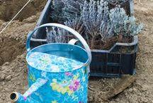 Levendula ültetés / 2015. március 28- án telepítettük a levendula mezőnket, mintegy 1000 tő tihanyi levendulapalántával. 14 méter szélesen, 60 méter hosszan francia levendula a kapolcsi hazai Provence kertjében.