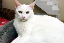 Adoption Room / Adoptable cats at Shabby Cat.