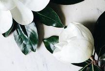Flora + Fauna / by [ KAY ]