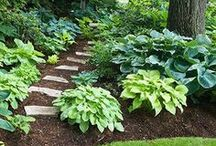 groen vingers / gardening/garden scapes