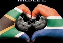 SAVE OUR RHINO!!!! / 333 rhinos poached in S.A. 2010, 448 in 2011, 668 in 2012, 1004 in 2013, 146 till 26th Feb 2014