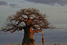 ons vir jou suid-afrika (limpopo) / Limpopo province