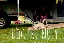 Dog Friendly Camping Australia / Here are a collection of our DOG FRIENDLY camping sites all around Australia!