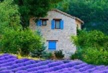 France / Paris / Provence