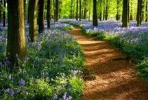 Florance's Forest