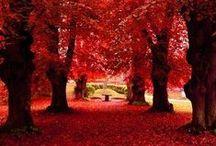 Autumn. Red